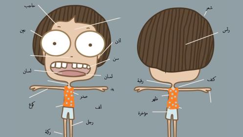 أجزاء الجسم