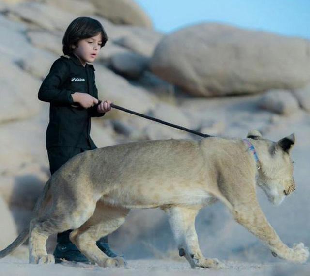 طفل يتحكم في الاسد