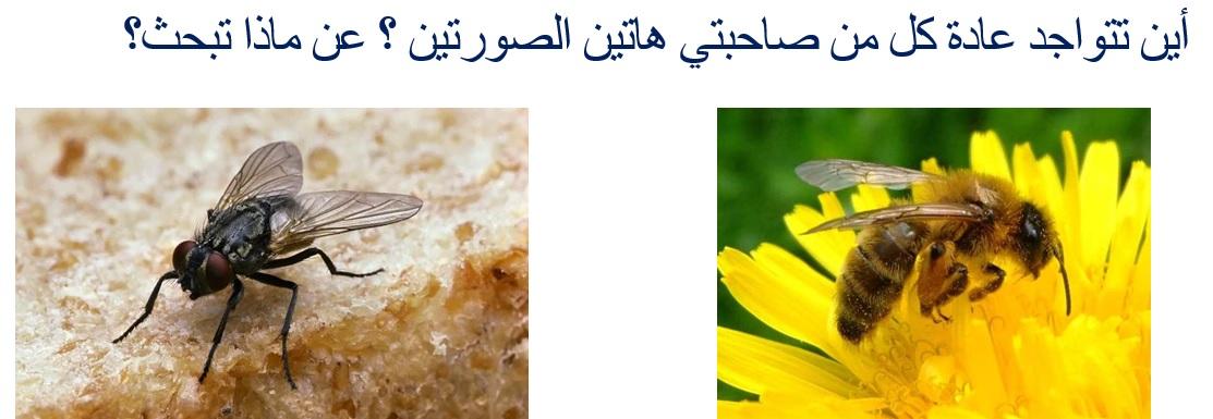النحلة والذبابة
